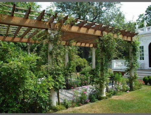 داربست باغی
